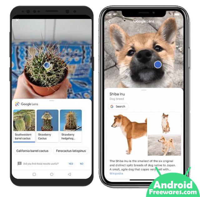 google lens identify plants and animals